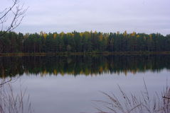 Forest Lake. A beautiful calm lake in the autumn forest stock photos