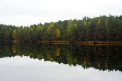 Forest Lake. A beautiful calm lake in the autumn forest royalty free stock photos