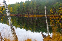 Forest Lake. A beautiful calm lake in the autumn forest royalty free stock images