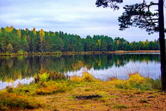 Forest Lake. A beautiful calm lake in the autumn forest royalty free stock image