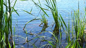Forest lake at beautiful day.  stock footage