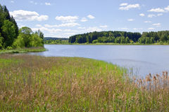 Forest lake with blue skies at the lake. Summer view of forest lake with blue skies at the lake Royalty Free Stock Photos