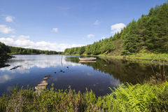 Forest lake. With boat in Scotland royalty free stock images