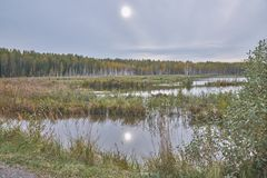 Forest Lake in centraal Rusland stock foto