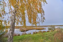 Forest Lake in centraal Rusland stock afbeelding