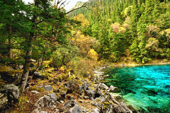 Forest and lake in China Royalty Free Stock Photo