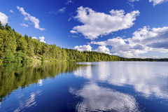 Forest lake on cloudy. Summer day Royalty Free Stock Image