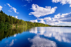 Forest lake on cloudy. Summer day Stock Images