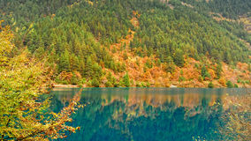 The forest and lake Royalty Free Stock Photography