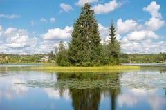 Forest Lake con una picea en la isla Fotografía de archivo