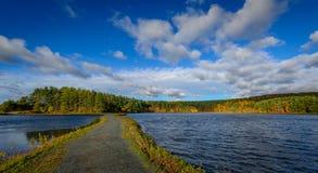 Forest Lake in Daling Royalty-vrije Stock Fotografie