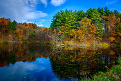 Forest Lake in Daling Royalty-vrije Stock Foto's