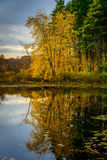 Forest Lake dans l'automne photo stock