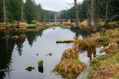 forest lake deszcz zdjęcia royalty free