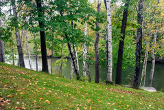Forest  lake in the early autumn,  Monroe County, Wisconsin, USA. Birches and oaks on the shore of the forest  lake in the early autumn,  Monroe County Royalty Free Stock Images