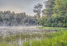 Forest and lake in early morning Royalty Free Stock Photo