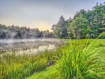 Forest and lake in early morning Stock Images