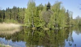 Forest Lake en Alemania con la reflexión en el agua Fotos de archivo libres de regalías