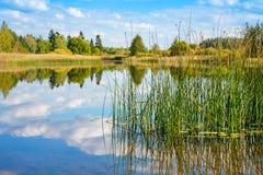 Forest lake. Estonia Royalty Free Stock Image