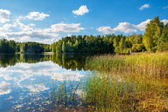 Forest lake. Estonia. View of the Lake Paunkula. Estonia, Europe stock image
