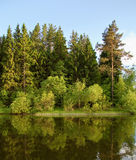 Forest lake in the evening. And tree reflection in water Royalty Free Stock Photo