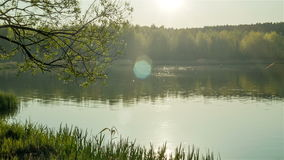 Forest lake at the evening stock video footage