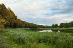 Forest lake at the evening royalty free stock photos