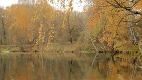At the forest lake in the fall stock video footage