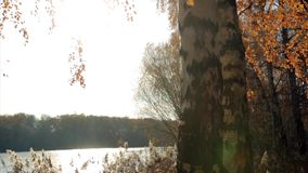 At the forest lake in the fall stock footage