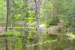 Forest lake, Finland. Lake in the forest, spring(may Stock Photography