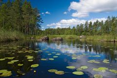 Forest lake with flowers Royalty Free Stock Photography