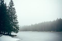 Forest lake in fog III Royalty Free Stock Images