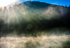 Forest lake in fog at sunrise Royalty Free Stock Image