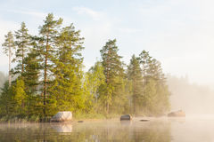 Forest by the lake and foggy morning Royalty Free Stock Image