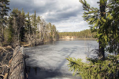 Forest lake. Forest frozen lake at spring Royalty Free Stock Image