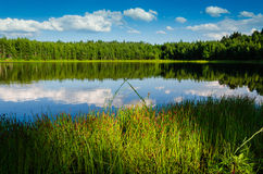 Forest lake. Grass on the forest lake in a sunlight Royalty Free Stock Photos