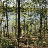 Forest on Lake Hartwell shore Royalty Free Stock Images