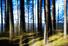 Free Forest Lake Horizon Light Vertical Abstraction Royalty Free Stock Photo - 55555355