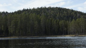 Forest Lake i Sverige Royaltyfria Foton