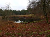 Forest Lake im Fall stockfotos