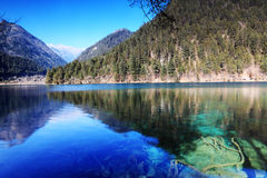 Forest and lake jiuzhai. Forest and lake in jiuzhaigou sichuan china Royalty Free Stock Photo