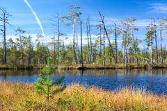 Forest lake in Karelian woods at summer Royalty Free Stock Photo