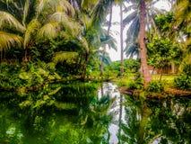 Forest lake Krabi Stock Photography