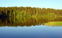 Forest Lake landscape Stock Photo