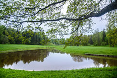 Forest lake. Landscape is idyllic. Landscape is idyllic. The forest and the lake in loue, Park. Summer day in nature. Pavlovsk Park, city of Pavlovsk. The kings Royalty Free Stock Photo