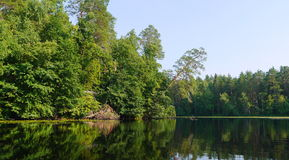 Forest lake landscape Royalty Free Stock Images