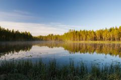 Forest lake landscape summer sunrise. In Finland stock photography