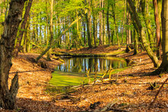 Forest Lake-Landschaft Lizenzfreie Stockfotografie