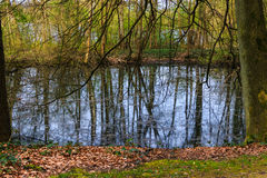 Forest Lake-landschap Royalty-vrije Stock Foto
