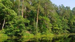 Forest Lake landskap Royaltyfri Fotografi